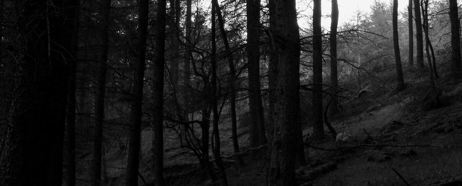 black_forest
